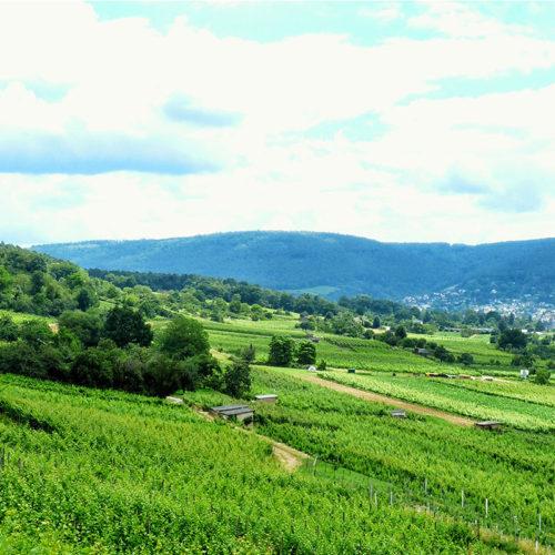 Region Landschaft